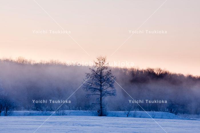 朝霧に浮かぶ樹氷